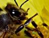 Best Bee