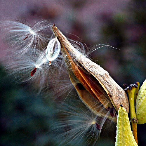 seed pod - nature conservancy lot